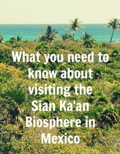 Visiting the Sian Ka'an Biosphere in Mexico - What you need to know (Hint: It's a FAB day trip!)    #mexico #tulum #playadelcarmen #cancun #rivieramaya #vacation #beach #ecotourism