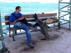 ▶ Galapagos Sea Lion Wants Seat on Bench - YouTube