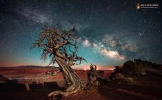 By Mike Taylor Dead Horse Point at Night  The Milky Way rises in the Southeast .