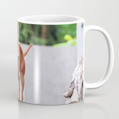 Available in 11 and 15 ounce sizes, our premium ceramic coffee mugs feature wrap-around art and large handles for easy gripping. Dishwasher and microwave safe, these cool coffee mugs will be your new favorite way to consume hot or cold beverages.  #pinscher #dog #miniature #miniaturepinscher #red #pet #puppy #purebred #animal #domestic #cute #pet