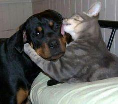 Animais deixam diferenças de lado e posam em fotos que são puro amor http://r7.com/yFH0  (Foto: Reprodução/Reddit)
