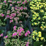 korallvirág - viragbarat.hu Plants, Plant, Planets