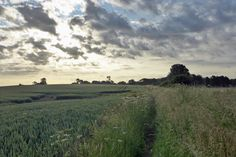 Lincolnshire, England, July 2015. Soaked from the knees down after walking through this - the long grasses were still dew-damp.