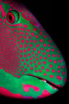 Лучшие фотографии с фотоконкурса ZSL Animal Photography Prize 2013 Портрет рыбы-попугая». Категория «Deep and Meaningful»