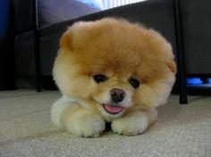 CUTE little fur ball.