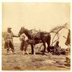 indians and horses Plains Indians, Native American Indians, Native Americans, Ocelot, Appaloosa, Us Images, Free Images, Westerns, Morning Star