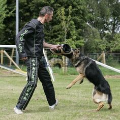 Doge, Rottweiler, Collie, Dog Training, Euro, Sleeves, Animals, Military, Animales
