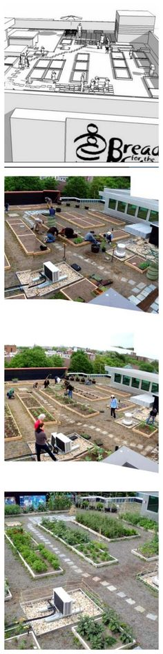DC's largest urban rooftop farm!  This garden produces fresh, healthy food for use in Bread for the City's pantries and cooking workshops—and, more importantly, they will be spaces that foster reflection, learning and dialog about health and food justice, across lines of class, race and age.