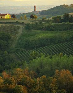 Monferrato - Piemonte, Italy