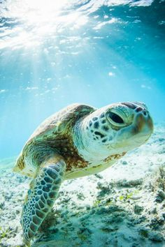 Costa Rica Sea Turtle Research Project #travel #turtlelove