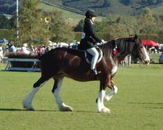 Clydesdale Horse Society of New Zealand