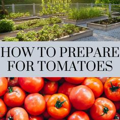 Where you plant your tomatoes in the garden is important. Learn how to prepare your garden for the best tomato results. Tomato Seedlings, Tomato Garden, Garden Quotes, Heirloom Tomatoes, Autumn Garden, Growing Vegetables, Good Advice, Horticulture, Amazing Gardens
