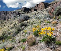A touch of springtime in the rim rock country of the high desert. # 280