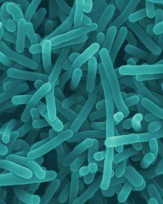 La meningite vista al microscopio - Foto - il Tirreno