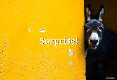 #FlickrFriday: Surprise! | Let's surprise us with a surprising shot and share it within the Flickr Friday group by adding #FlickrFriday