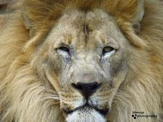 Close up :) Fort Worth Zoo, Dallas, Animals, Animales, Animaux, Animal, Animais