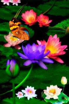 Бабочка на лилиях