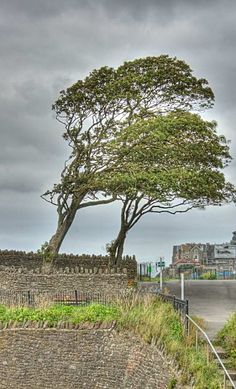 Trees atClevedon