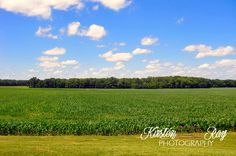 #nature #bluesky #clouds #cornfield #greengrass #trees #woods #photography #WallArt #HomeDecor #beautifulview #sky #beautiful #Etsy #ArtForSale ©Kirsten Ray Photography