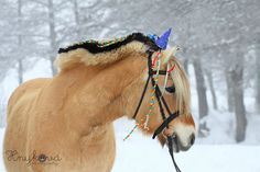 The world's truly unlimited photo gallery. No limits on number of photos. No shrinking. Photo Galleries, Horses, Gallery, Animals, Animales, Roof Rack, Animaux, Animal, Animais