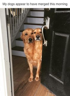 Double the retrieving power. (via negativepitch)