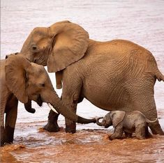 Animal world week photography selection - Page 2 of 22 - Gloria Love Pets Cute Baby Animals, Animals And Pets, Funny Animals, Nature Animals, Wild Animals, African Elephant, African Animals, Mundo Animal, My Animal