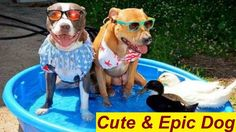 Funny and Cute Puppies and Dog Videos Compilation 2017 [BEST OF] | Cutes...
