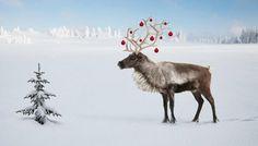 PER BREIEHAGEN. Winter's tale