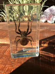 Spider Paperweight