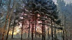 Talvinen aamuhetki Tampereella