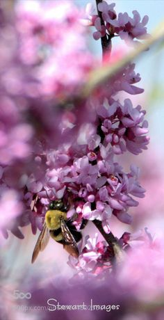bee and blossoms...