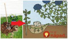 Kuta, Gardens, Outdoor Gardens, Garden, Tuin, House Gardens, Formal Gardens
