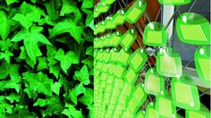 Inspired by the principles of photosynthesis and the growth patterns of ivy, Solar Ivy is a customizable, non-toxic and completely recyclable modular system that brings a technology traditionally restricted to rooftops to almost any architectural surface. #sustainability