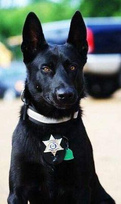 HERO DOG - Police Dog Rescues Deputy From Brutal Roadside Ambush. What A Story !!