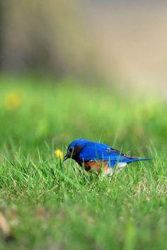 Birds at Spring Lake | by Macomb Paynes
