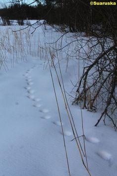 Luonto kauneimmillaan Winter Springs, Pathways, Snow, Outdoor, Outdoors, Paths, Outdoor Games, The Great Outdoors, Walking Paths