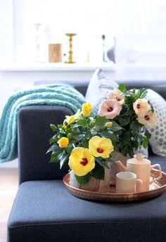 Groen wonen | Chinese roos (Hibiscus)=Woonplant v/d Maand mei - Stijlvol-Styling-Woonblog -www.stijlvolstyling.com