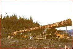 need whole winter's worth of fire wood in one big piece?This guy can deliver it,you still have to cut,split and stack it by yourself. Logging Equipment, Heavy Equipment, Custom Big Rigs, Peterbilt Trucks, Heavy Machinery, Big Trucks, Semi Trucks, Old Pictures, Forest Pictures