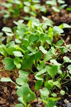 La ce Adâncime Semănăm şi Plantăm? - magazinul de acasă Good To Know, Greenhouses, Gardening, Culture, Plant, Green Houses, Garten, Conservatory, Lawn And Garden