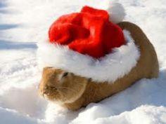 Cute rabbit!
