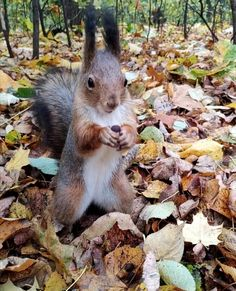 Happy Squirrel, Squirrel Pictures, Racoon, Cute Little Animals, Squirrels, Woodland Animals, Guinness, Animals And Pets, Fur Babies