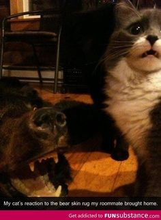 The longer you look at the cats face, the funnier it gets. he looks so concerned.