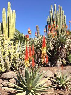 Cactus Garden, Palmitos Park, Gran Canaria