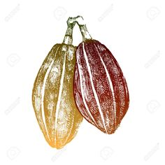Fruit drawing mango Ideas for 2019 Food Illustrations, Illustration Art, Fruit Trees In Containers, Cocoa Fruit, Fruits Drawing, Fruit Decorations, Wedding Place Settings, New Fruit, Chocolate Packaging