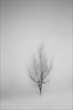 Minimal Photography, Black And White Photography, Landscape Photography, Nature Photography, Photography Ideas, Lone Tree, Winter Beauty, Mists, Photo Shoot