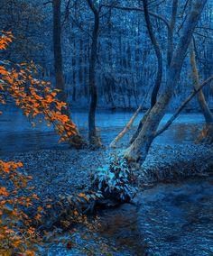 Trees - Mevludin Sejmenovic