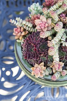 Me encantan los colores y las formas en este arreglo de suculentas. Love the colors on this succulent centerpiece.