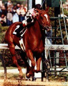Affirmed. 1978 Preakness Stakes winner and Triple Crown champion. Jockey: Steve Cauthen. Winning time: 1:54:40