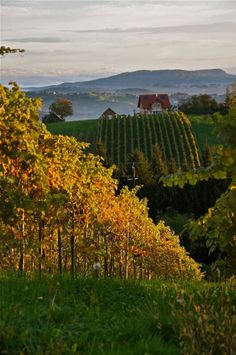 Styria (Steiermark), Austria ~ magnificent rolling hills of vineyards and orchards. Land of my ancestors