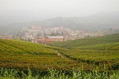 Piemonte: På två hjul mellan italienska vingårdar